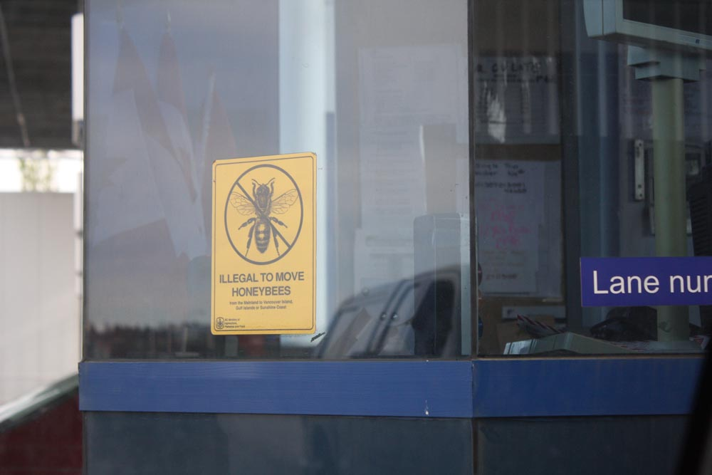 WTF? I didn't know illegal bees were a big problem for BC Ferries. I wonder if Eddie Izzard knows about this