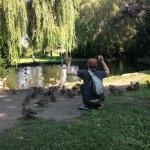 when ducks attach